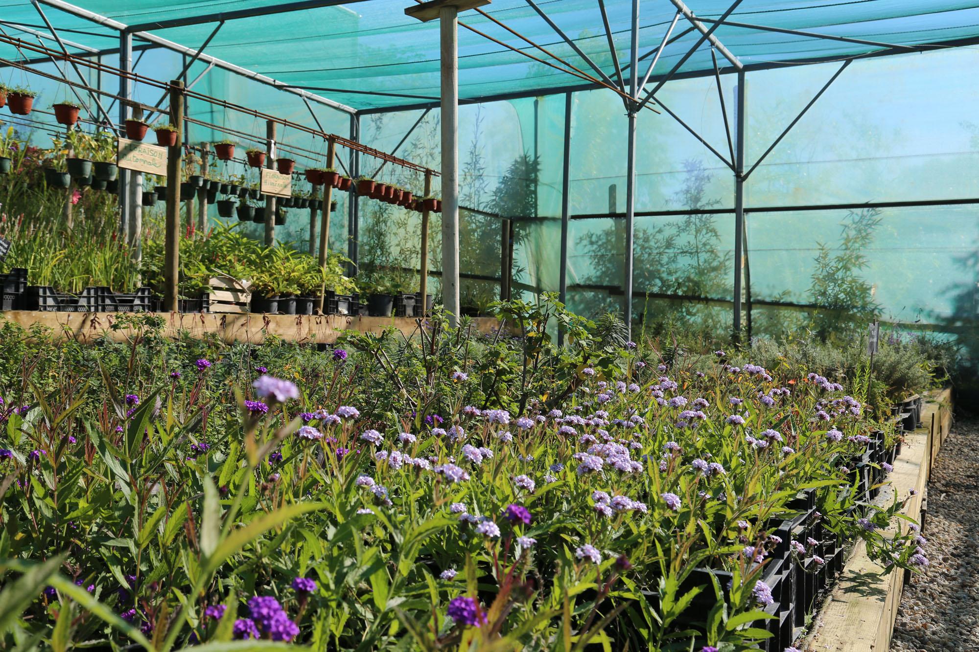 la p pini re et le showroom horticulture et jardins. Black Bedroom Furniture Sets. Home Design Ideas