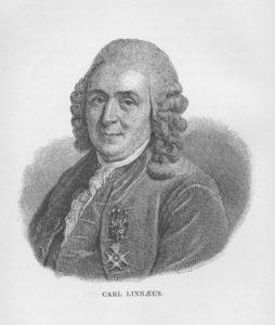 carl-von-linne
