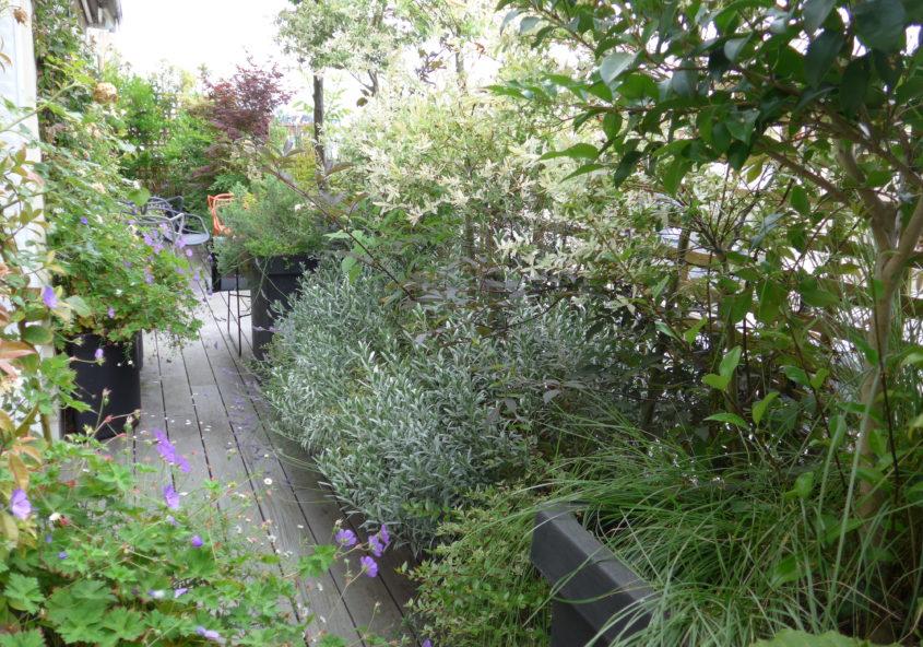 actualit s archives horticulture et jardins. Black Bedroom Furniture Sets. Home Design Ideas
